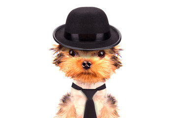 Dog dressed as mafia gangster