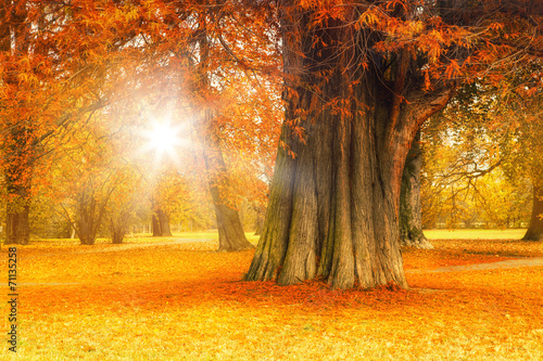 canvas print picture golden october