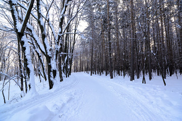 country road in forest at winter