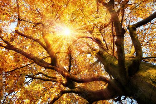 Leinwanddruck Bild Prächtige Herbstszene