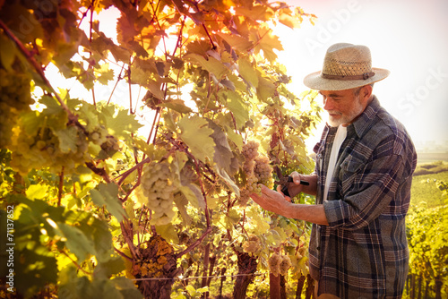 Leinwanddruck Bild Man working in a vineyard