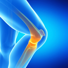 medical illustration of the knee joint