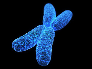medical illustration of a x-chromosome