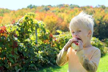 Young Child Eating Fruit at Apple Orchard