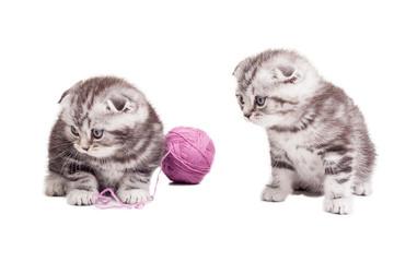 Tiny cuties.