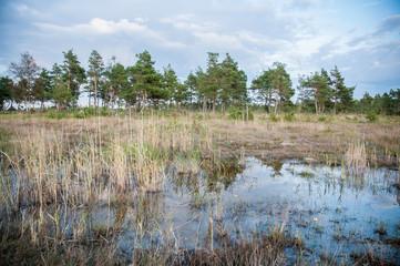 marshes, Estonia