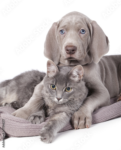 Keuken foto achterwand Kat Dog and cat relaxing on white background