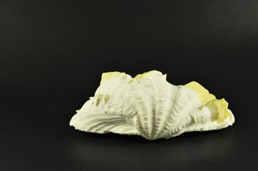 Beautiful large seashell, isolated on black background