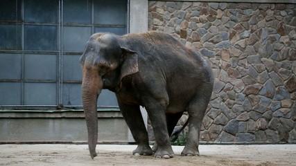 Tanzender Elefant lustiger Tanz zur Musik 5