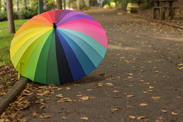 colorful Umbrella in Fall Leaves
