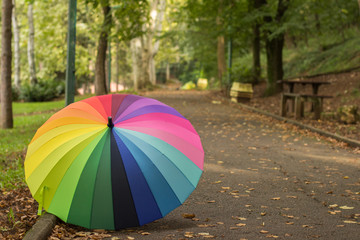 colorful Umbrella in Fall Leaves