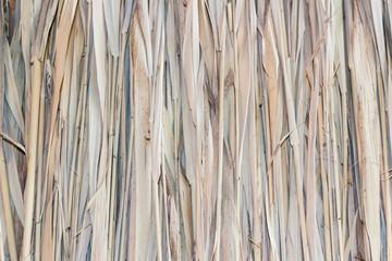 Marsh Plants Huts