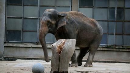 Tanzender Elefant lustiger Tanz zur Musik 1