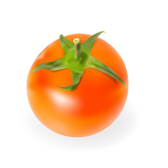 Fresh Tomatoes Isolated on White Background Vector Illustration