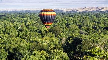 Many trees in Boise Idaho beneath a hot air balloon