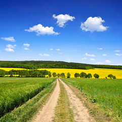 Dirt road in a spring landscape