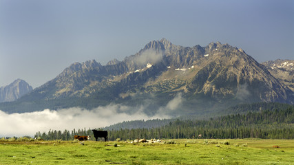 Grazing cows in the magnificent mountains of Idaho