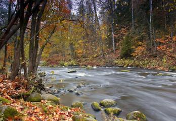 glandulosa grove , Leningrad region, Russia