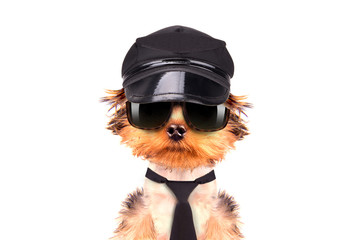 A dog wearing a cap and glasses with tie