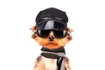 A dog wearing a cap and glasses with scarf