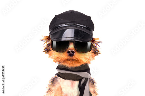 Deurstickers Dragen A dog wearing a cap and glasses with scarf