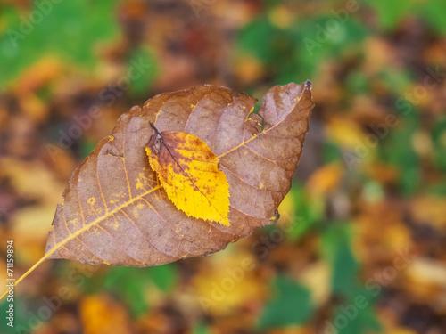 canvas print picture Blatt und Baum im Herbst