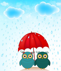 funny birds with umbrella