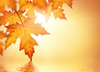 Fall background with orange leaves