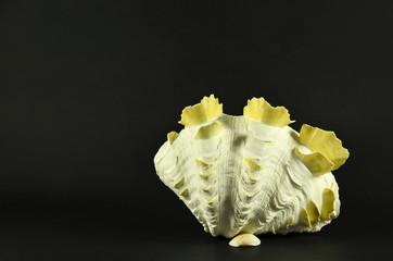 Beautiful large seashell standing, isolated on black background