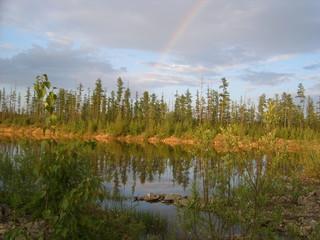 лесной водоём