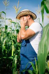 Farmer inspecting corn plant in field