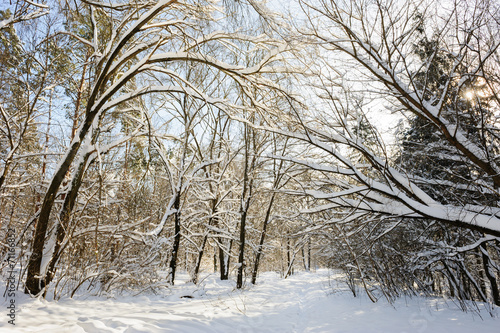 canvas print picture snowy winter forest