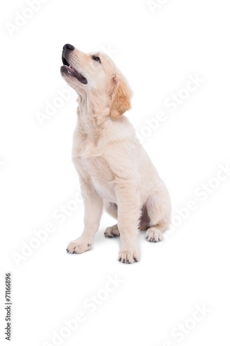 canvas print picture Cute puppy looking upwards