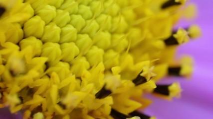 Macro flower inner parts