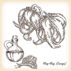 Cosmetic herbs. Plant Ylang-Ylang (Cananga). Hand drawn vector