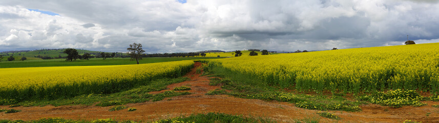 Green hills, golden crops and red earth