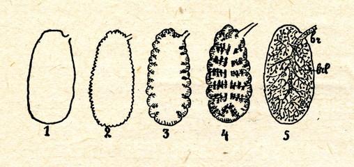 Lungs: 1newt, 2frog, 3primitive reptile, 4turtle, 5mammal