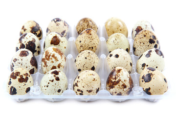 Quail eggs in the container on white background.
