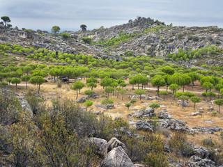 Cerro Labros en Cadalso de los Vidrios