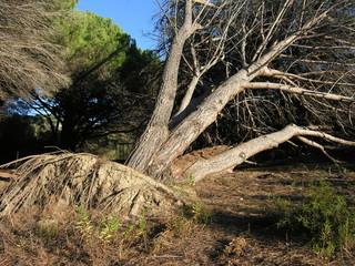 regno degli alberi 2