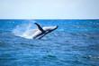 Whale breaching - 71173682