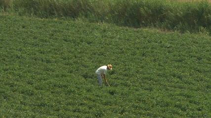 Farmer digs field