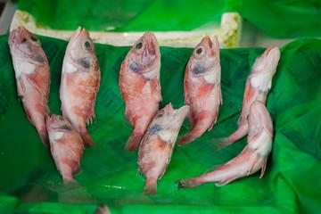 Fish market & Seafood: Istanbul, Bosphorus