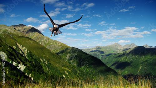 Foto op Canvas Eagle eagle