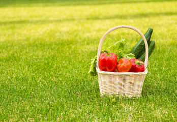 vegetables in basket on green grass