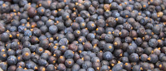 seeds of juniper