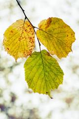 Fall season nature background. Yellow green autumn leaves