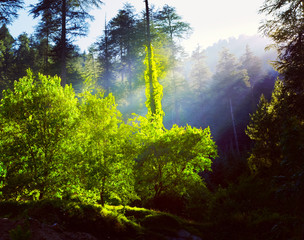 Morning forest with sunrays