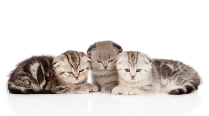 three baby kittens in front. isolated on white background