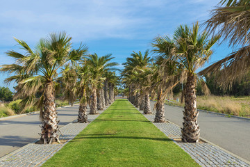 promenade with palm trees